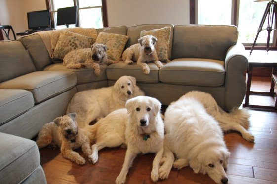 Six pups