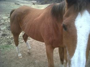 Skinny Horse 1