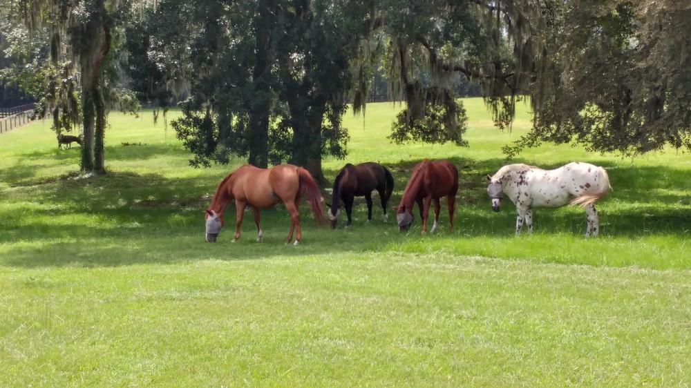 herd4
